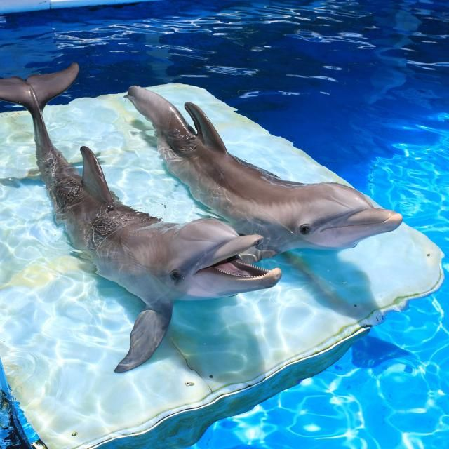 At the Clearwater Marine Aquarium in Clearwater Beach, Winter the Dolphin's home, you can skim your hand across the back of a ray, marvel at sea turtles and shake the fin of a dolphin.