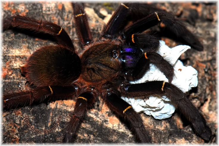 1000+ images about Spiders on Pinterest | Roaches, Baboon ...