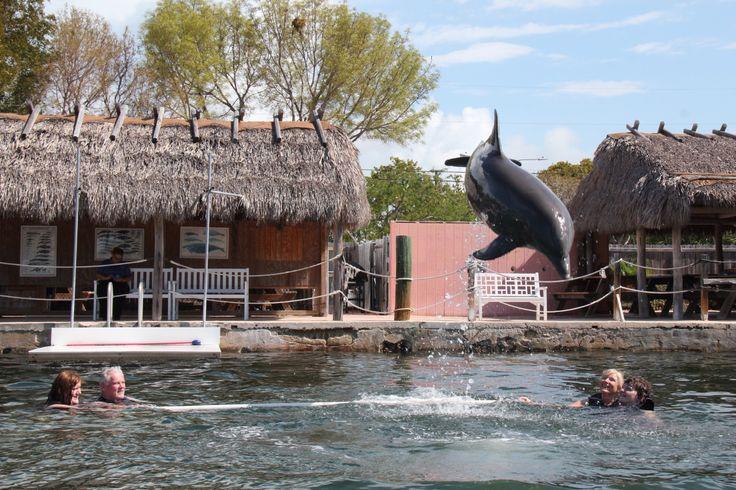 Dolphin plus, Key Largo, Florida