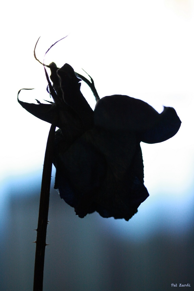 Dark, by Pat Zardi