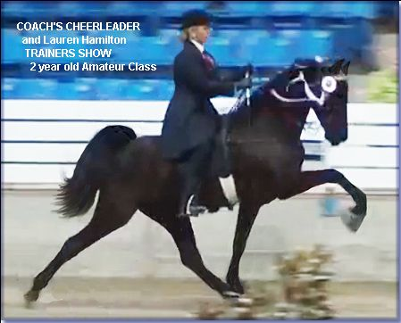 For Sale - COACH'S CHEERLEADER #21002451 - beautiful black Tennessee Walking Horse filly, born 10/01/2010. She is by WGC The Coach X She's A Home Run, by Ted Williams. The best of modern bloodlines. Cheerleader just won the 2 year old Riders Cup mares and geldings, and 2nd in the 2 year old amateur class in Jackson, MS. Located in Missouri. For sale by private treaty. Please call 573-471-4352 for more information.   http://www.holmesfarmwalkers.com/CoachsCheerleader.htm