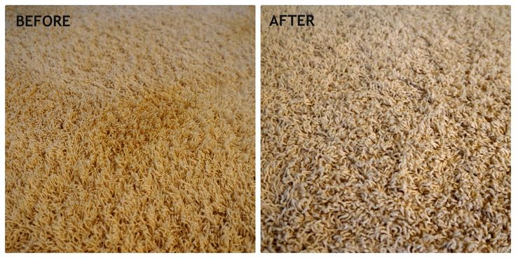 How To Remove Tough Pet Stains Diy Carpet Stain Remover