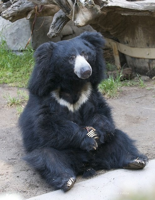 Sloth Bear http://www.pinterest.com/kolyaCoupons/miami-zoo-coupons/ Miami zoo coupons