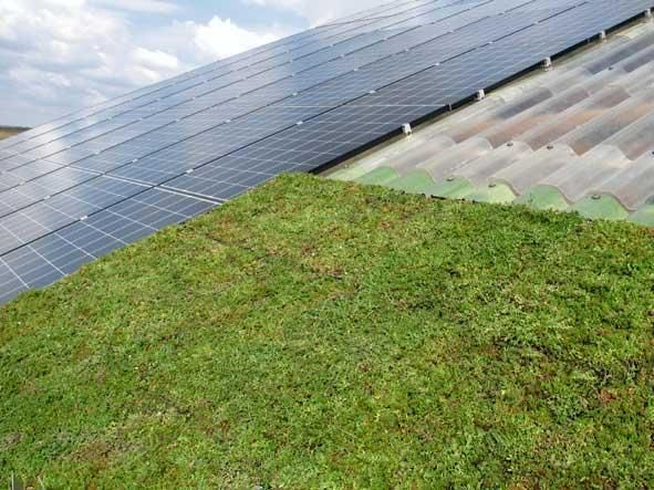 Sloping green roof with photovoltaic panels.