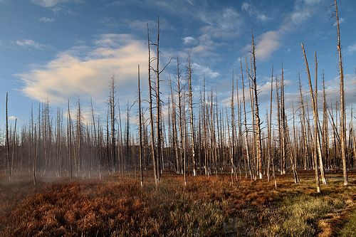 yellowstone fire | Climate Change to Dramatically Alter Yellowstone Fire Cycle