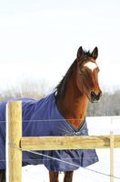 How to make your own horse blanket Ideal fabric - PVC coated woven nylon as it is much more durable, provides UV protection and is much cooler for the horses