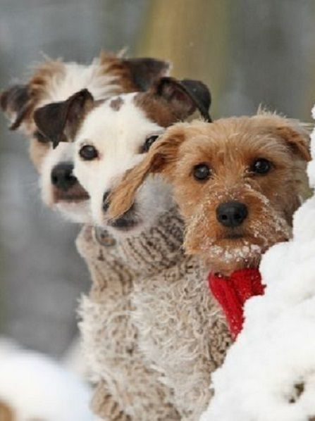 three dogs in the snow