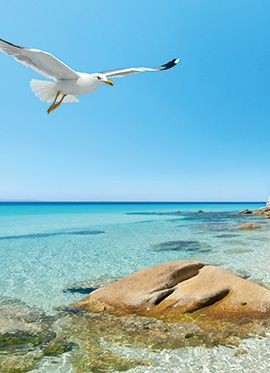 Grecotel Pella Beach | Premium Hotel in Hanioti - Chalkidiki