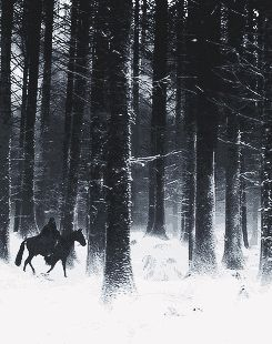 The Northern Tundra is harsh to any unprepared traveller. One can easily get lost in those shadowy trees. If you hear enchanting voices against the bellowing icy wind, be wary traveller, because you have entered her realm - A.R. Hanley