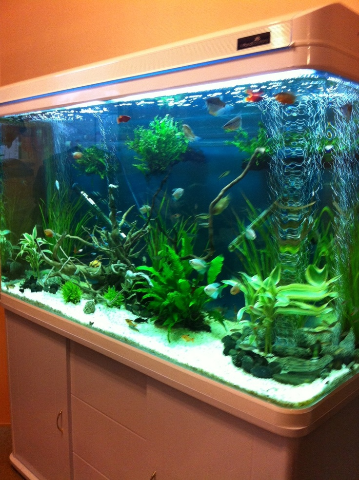 Barry's 120cm Cabinet tank in white!    http://www.allpondsolutions.co.uk/cabinet-fish-tank-aquarium-330-litres-120cm-four-colours.html