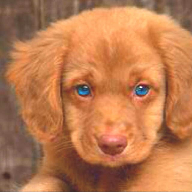 17 Best images about puppies on Pinterest | Puppys, Eyes ...