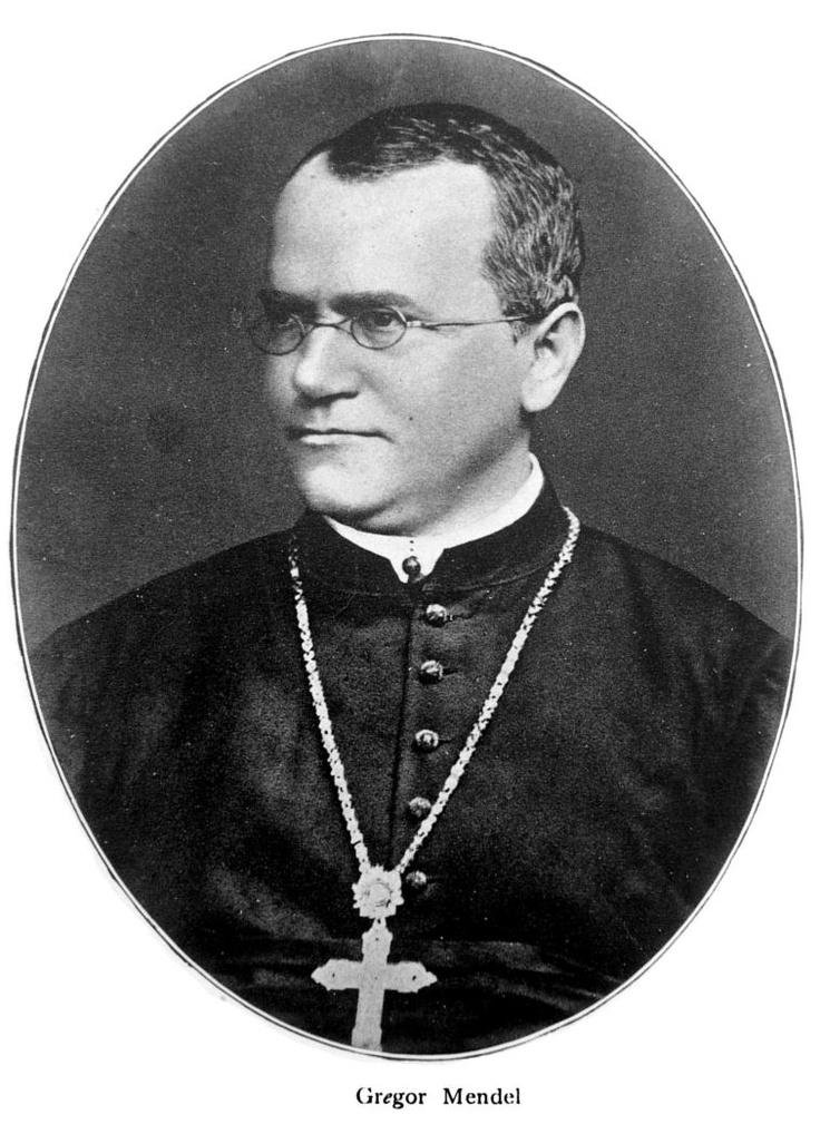 Search result for Gregor Mendel