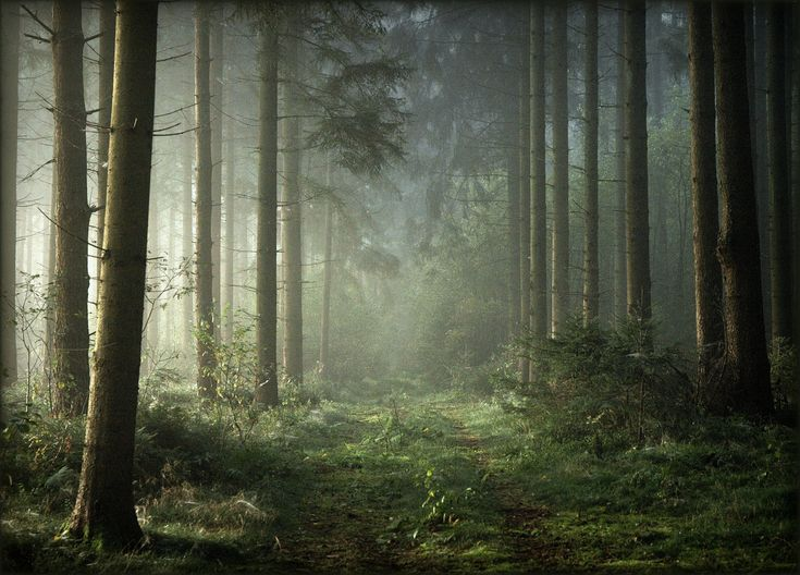 25 Trending Magical Forest Ideas On Pinterest Magic