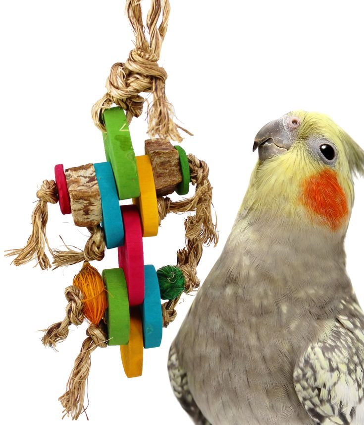 Make Your Own Bird Toys : Best bonka bird toys images on pinterest