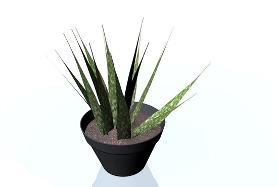 3D mother in law tongue plant model in FBX 3D model format that works with most 3D modeling software.