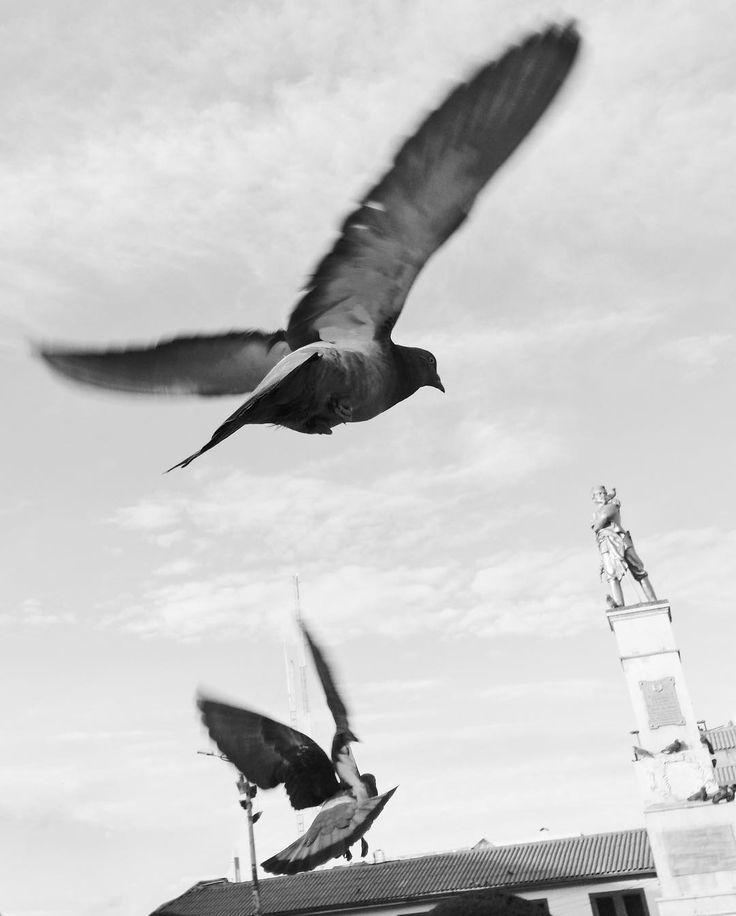 Je sais c'est un classique mais je ne peux juste pas m'empêcher de courrir après les pigeons comme un enfant dans mes voyages. #vsco #iphone #travel #pigeon #pigeons #bw