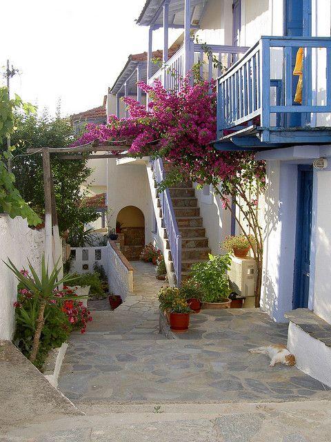 Sleeping cat on the streets of Alonnisos, Sporades, Greece (by Luigi Rosa).