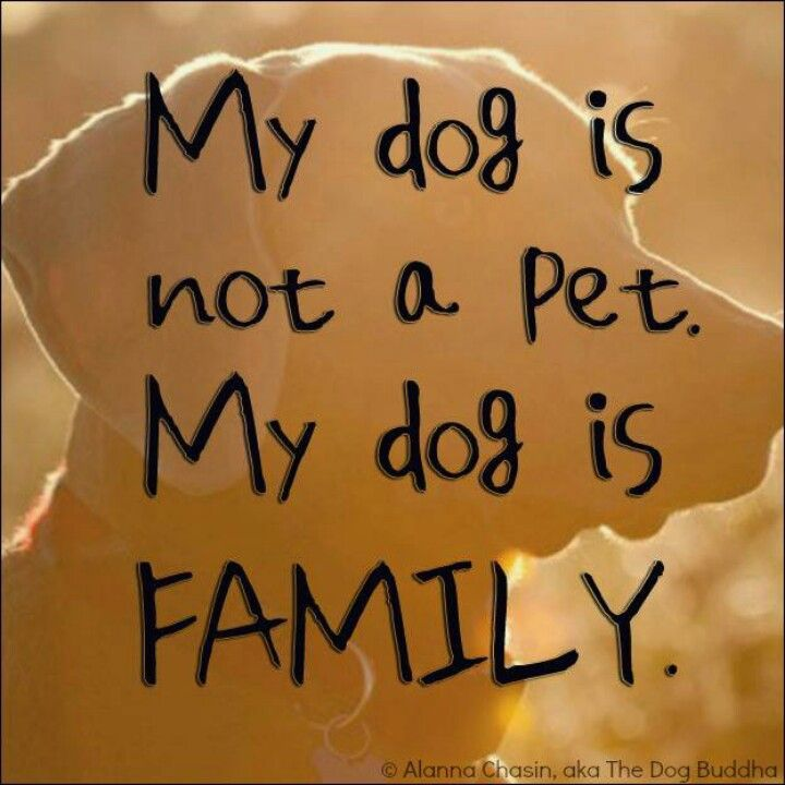 Pets are family, too.They should be invited to all holidays, all vacations, and all events. I wish people understood this!