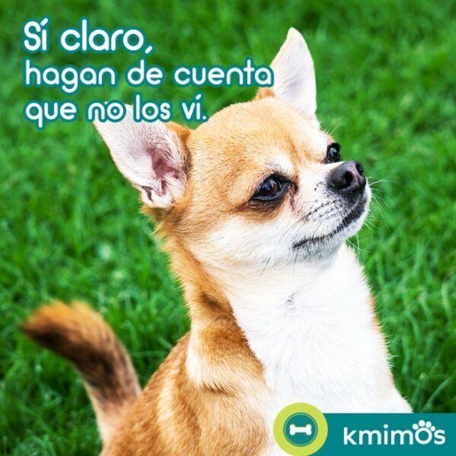 Cuando quieren escondernos algo.  #Dogs #Perros #Puppies #Perritos #Peludos #Instapet #Instadog #DogsOfInstagram #DogLover #Love #Amor #Care #Cuidados #Kmimos #Cuidadores #Amigos #Friends #México #Mx