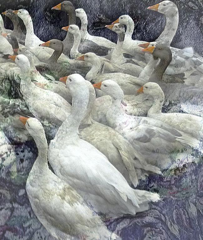 Geese by James Hackworthy 2012