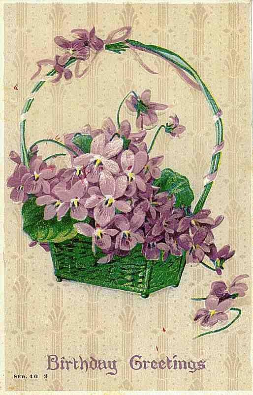 birthday violets