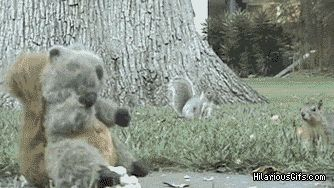 There are two kinds of squirrels. | 31 GIFs That Will Make You Laugh Every Time This will never not be funny.