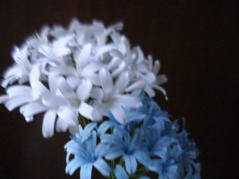 How to make Paper Flower Agapanthus / Lily of the Nile