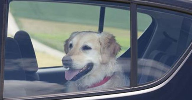 Lascia il suo cane chiuso in auto al sole: ecco come la punisce il poliziotto