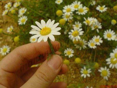 #hikaye #hikayeler #sevgi #emek #ibretlikhikayeler #sevgihikayeleri  Sevgi Emek İster http://www.inanankalpler.net/417/sevgi-emek-ister/