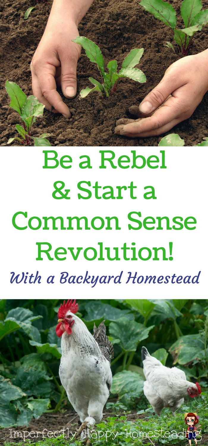 1849 best posts by imperfectly happy homesteading images on