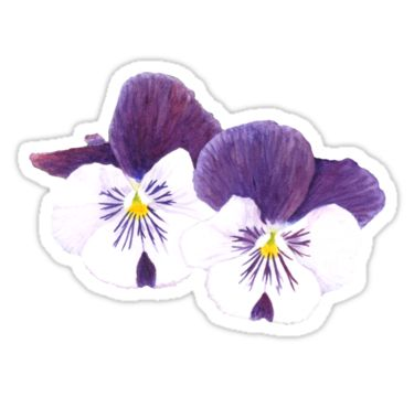"""""""White and purple Pansies flowers"""" Sticker by Savousepate on Redbubble #sticker #watercolor #painting #watercolorpainting #flowers #pansies #pansy #spring #purple #white #green"""