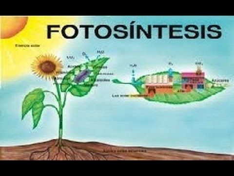 LA FOTOSINTESIS : DOCUMENTAL COMPLETO - YouTube
