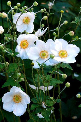tavaszi kerti virágok - Google keresés