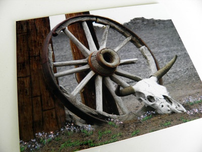 Old Wagon Wheel And Cow Skull X Color Art Mounted Print Ready To Frame