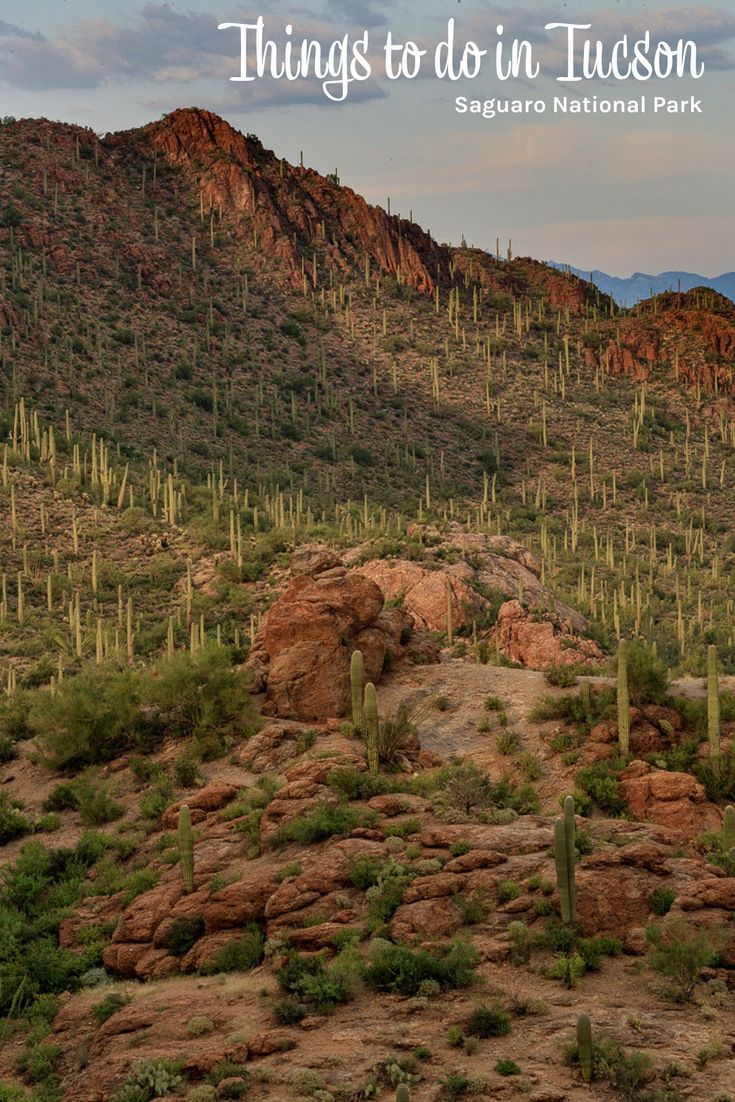 Things to do in Tucson Arizona (USA). Tucson things to do: Arizona-Sonora Desert Museum, Barrio Viejo, Pima Air & Space Museum, Saguaro National Park, murals and much, much more!