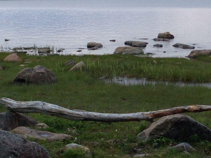 Merentuoma ajopuu mietintäpaikaksi rantaan.