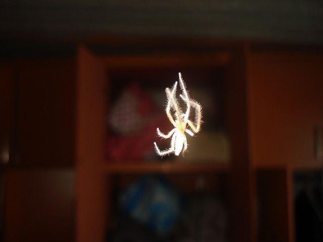 Araña Amarilla | Flickr: Intercambio de fotos