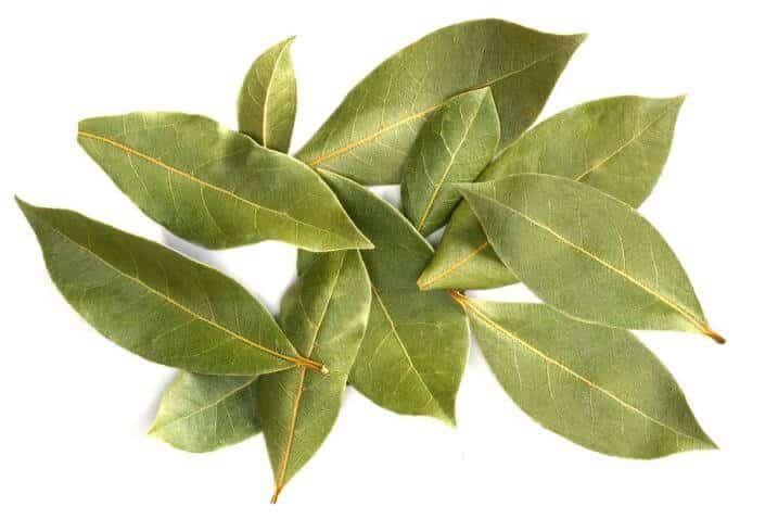Folha de Louro. Descubra nesse artigo os benefícios do louro para a nossa saúde e aprenda fazer um chá das folhas.  Folha de Louro. O louro é um tempero muito comum na cozinha portuguesa, mas essa