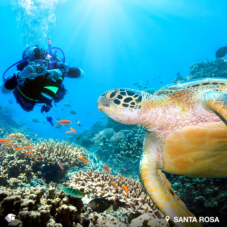 Santa Rosa, Cozumel. Quintana Roo, México.  Por sus corrientes más intensas, es un arrecife para buzos de nivel intermedio, que requiere incursiones violentas y rápidas. Es de los más famosos de toda Cozumel. Prepárate para encontrar gorgonias, esponjas de distintos colores y tortugas de hawksbill.