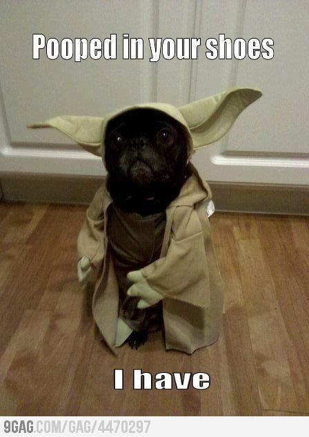 Very sorry, I am: Yoda Pug, Animals, Dogs, Star Wars, Funny Stuff, Pugs, Funnie