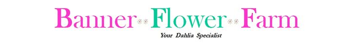Don't save dahlia tubers produced from cuttings, secret revealed! - Banner Flower Farm