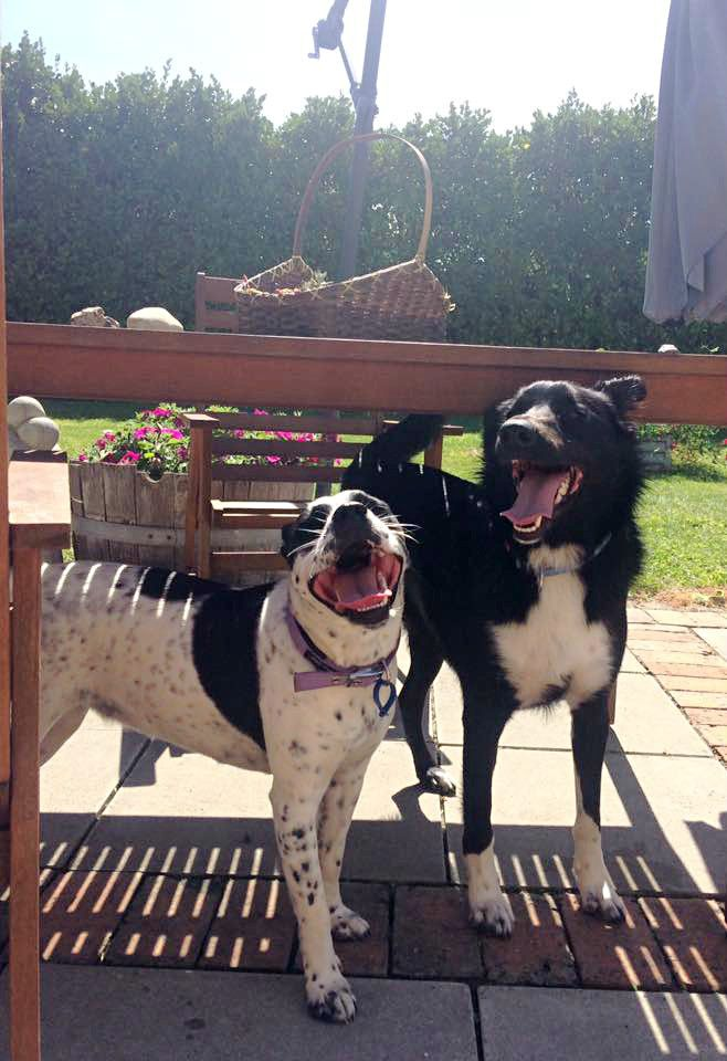 Our girl Mollie and her mate Riley having a play date.