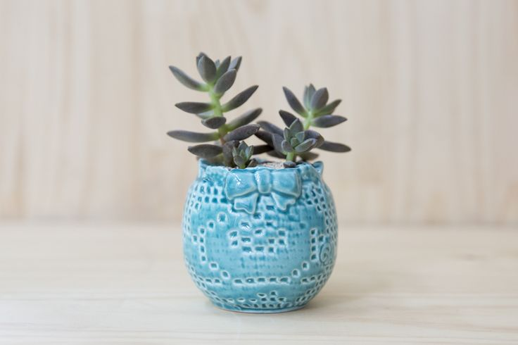 #binche #handmade #planter #ceramic #succulents Shop our products at www.habibiplantitas.com