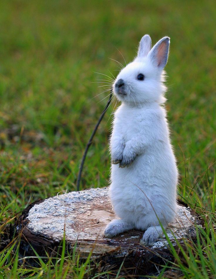 Bubbles on alert - Bubbles my bunny on alert...                                                                                                                                                                                 More