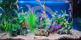 AQUARIUM SUPPLIES, ACCESSORIES AND EQUIPMENT: Setting Up a New Tropical Aquarium