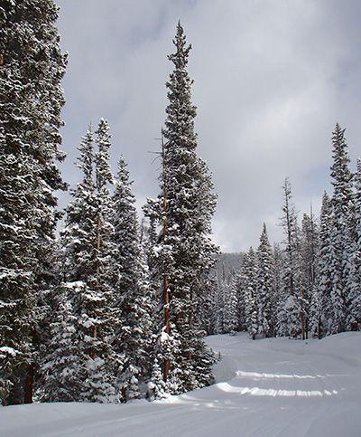 Family-friendly Winter Activities in Winter Park, Colorado