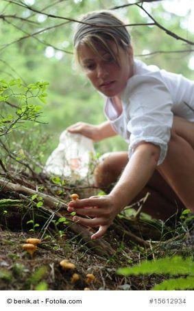 Heimische Pilze sammeln und identifizieren mit Hilfe vom Pilzlexikon - Sehr viele Pilzarten werden von den Menschen als Nahrungsmittel verwendet. Hierzu zählen viele kultivierbare Arten (z.B. Champignons) aber auch viele nicht kultivierbare Arten (beispielsweise Steinpilze und Pfifferlinge). Grundsätzlich unterscheidet man zwischen essbaren und giftigen Pilzen. Manche können sogar tödlich sein.