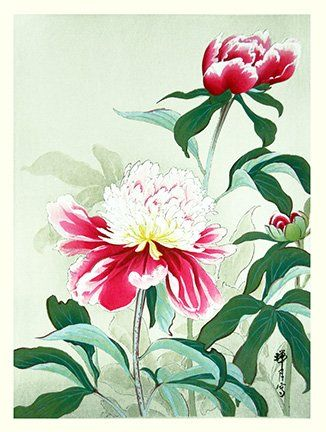 Artist: Zuigetsu Ikeda. Keywords: flower floral modern contemporary style woodblock woodcut print picture hanga japan japanese orient oriental asia asian art readercollection.com common garden peony
