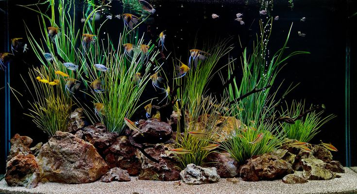 freshwater aquarium design ideas aquarium design group custom