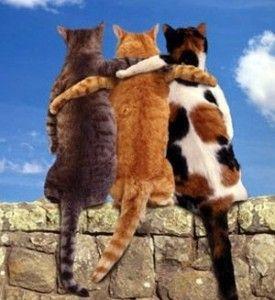 Legjobb idézetek – Barátság | Légy pozitív!